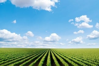 Canadian Agricultural Partnership Ontario: Eligibility for Producers