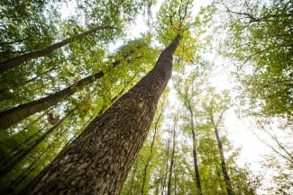 Investments in Forest Industry Transformation Canadian Government Funding