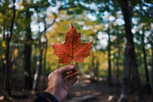 canadian flag nature